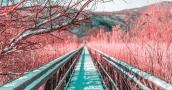 بالتركواز والوردي صور تخطف الأنفاس بالأشعة تحت الحمراء