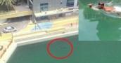 """بالفيديو: رجل جريء يسبح مع """"قرش الحوت"""" في دبي مارينا"""