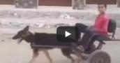 بالفيديو.. طفل مصري يستخدم كلبًا في جر عربة كالحمار