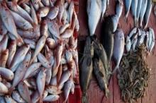 الاسماك تغزو شواطئ غزة