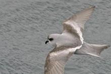 نفوق أكثر من 1300 طير بشكل غامض على شاطئ في ...