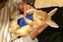 بالصور .. استخدام الحيوانات الأليفة كبديل لحافظة الهاتف