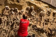 العثور على 200 جثة في مقبرة جماعية تحت سوبر ماركت ...