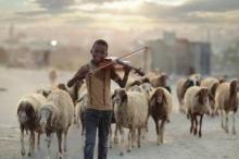 ما هي قصة صورة عازف الكمان الذي يرعى الأغنام في ...