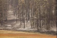دراسة: الأرض تكتسي بثلاثة تريليون شجرة لكنها تفقدها بمعدل مقلق