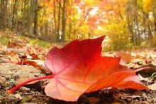 الشهر القادم - عيد وخريف وخسوف وامطار