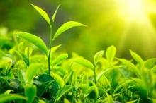 النباتات تمتص ثاني أوكسيد الكربون بنسبة اكبر بكثير مما هو ...
