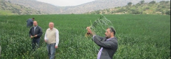 359 ألف طن العجز الفلسطيني في إنتاج القمح ونسبة الاكتفاء الذاتي 10%!
