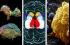 علماء الجينات ينشئون ذبابة تمشي إلى الخلف