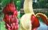 ما حقيقة الموز الاحمر ؟