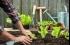 إليكم الجهاز الجديد لزراعة الخضار والفواكه في المنازل