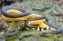"""بالصور.. رقم قياسى لـ """"ثعبان البحر العجوز"""" بـ 155 عامًا"""