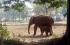 بالفيديو.. أنثى فيل تمضي 11 ساعة لإنقاذ صغيرها من الوحل