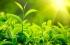 النباتات تمتص ثاني أوكسيد الكربون بنسبة اكبر بكثير مما هو معروف حاليا