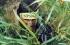 اصابة 4 جنود اسرائيليين ..الاعلام العبري : انفجارات في الشمال وحدث امني في مزارع شبعا