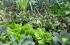 هل يمكن للزراعة التقليدية الصغيرة تلبية الطلب الكبير على المنتجات الزراعية بعيدا عن الكيما ...