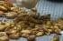 وجبات مغلفة من الحشرات تباع في تايلاند (فيديو)
