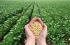 زيادة انتاج المحاصيل الزراعية أدى لارتفاع درجات الحرارة عالميا