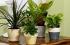 ثورة البيوت الخضراء.. فوائد زراعة النباتات فى المنزل