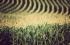 الرياضيات تساعد المحاصيل في مقاومة تغيرات المناخ وراثيا