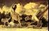 """واشنطن تعثر على أول حفرية لديناصور """" تيرانوصور ركس"""""""
