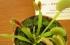 بالفيديو.. الديونيا.. نبات يجذب الحشرات بجماله ثم يفترسها