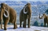 العلماء يتوصلون للتسلسل الجينومي الكامل لحيوان الماموث المنقرض
