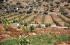 """""""أرض بلا حماية""""... واقع 70% من الأراضي غير المسجلة والمفروزة في الضفة الغربية المهددة بالا ..."""